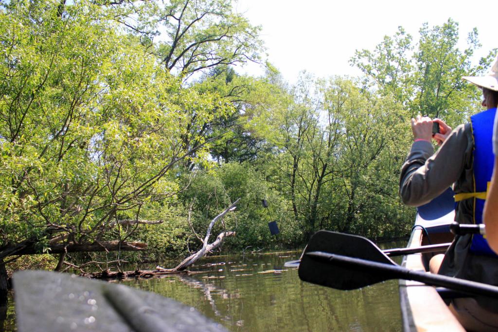 canoeing in toronto