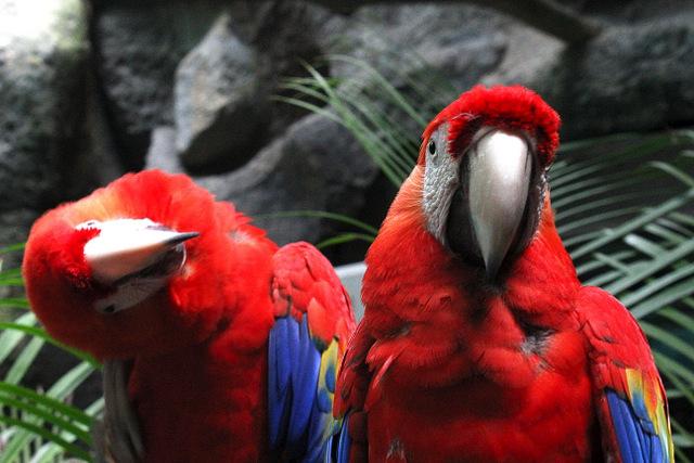 Acuario de Veracruz Parrot