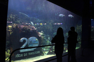 The Veracruz Aquarium