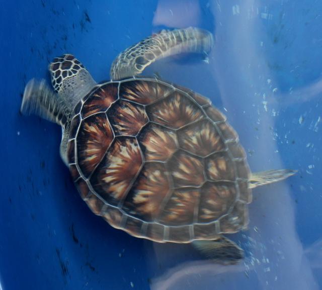Veracruz Aquarium